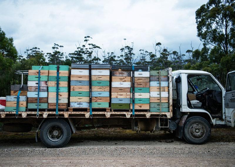 Bee Truck